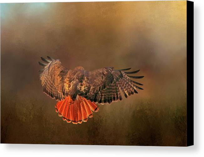 Red Tail Hawk Canvas Print featuring the photograph Airbrakes by Donna Kennedy