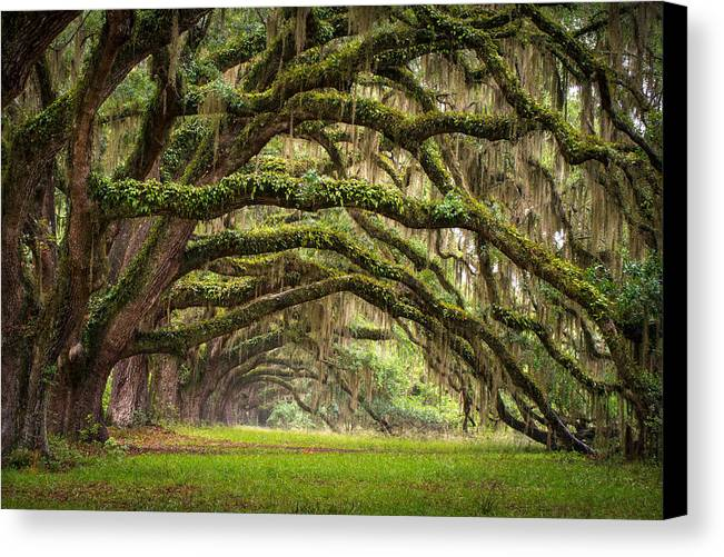 Charleston Sc Canvas Print featuring the photograph Avenue Of Oaks - Charleston Sc Plantation Live Oak Trees Forest Landscape by Dave Allen