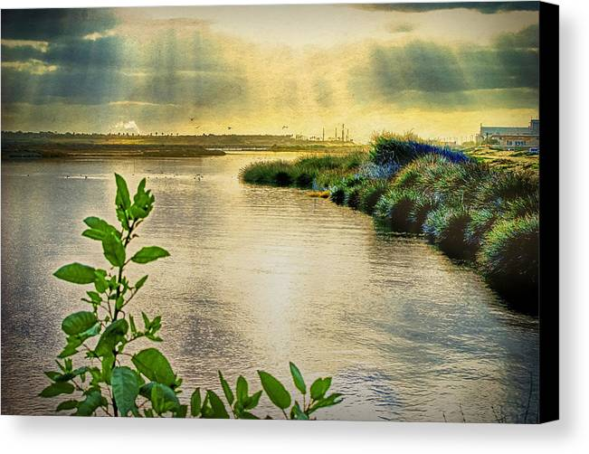 Wetlands Canvas Print featuring the photograph Bolsa Chica Bird Sanctuary by Joseph Hollingsworth