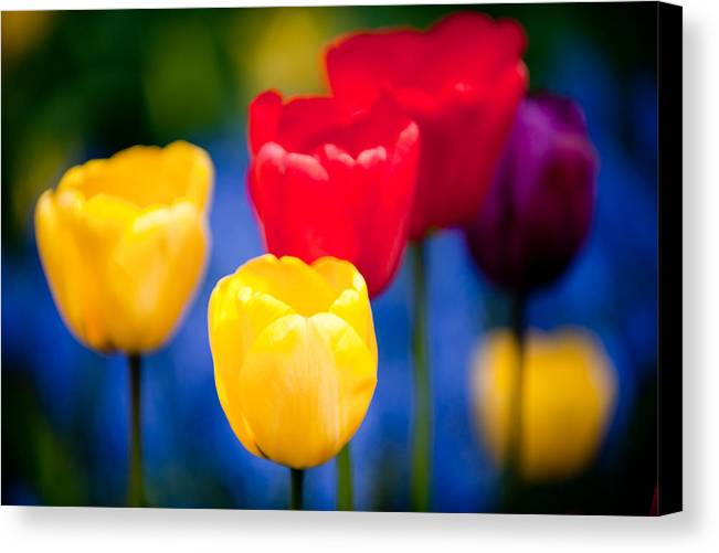 Flower Canvas Print featuring the photograph Colorful L569 by Yoshiki Nakamura