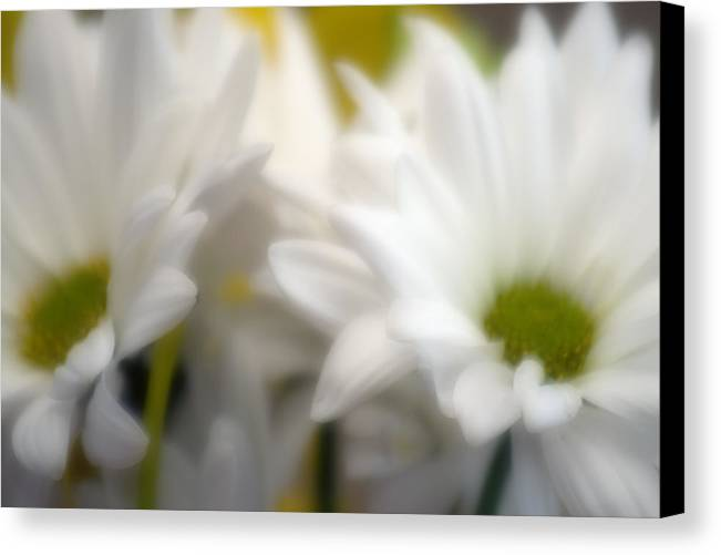 Floral Canvas Print featuring the photograph Dreamy Daisies by Ayesha Lakes