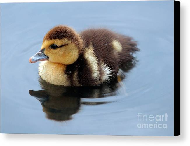 Baby Canvas Print featuring the photograph Duckling by Jeannie Burleson