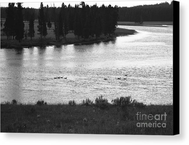 Wildlife Canvas Print featuring the photograph Dusk At The Yellowstone River by Susan Chandler