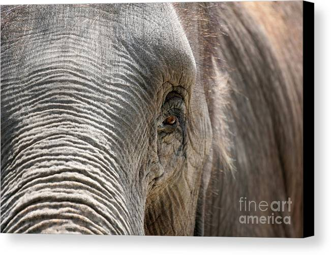 Asian Canvas Print featuring the photograph Elephant Eye by Jeannie Burleson