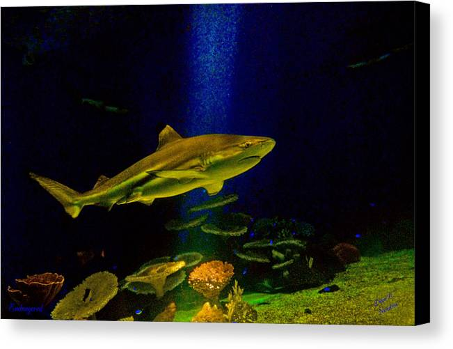 Nature Canvas Print featuring the photograph Endangered by Diane C Nicholson