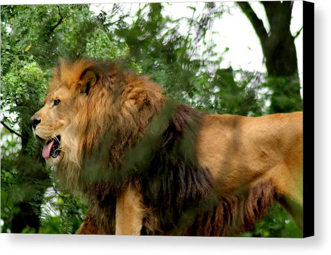 Lion Canvas Print featuring the photograph Endless Pride by ShadowWalker RavenEyes Dibler