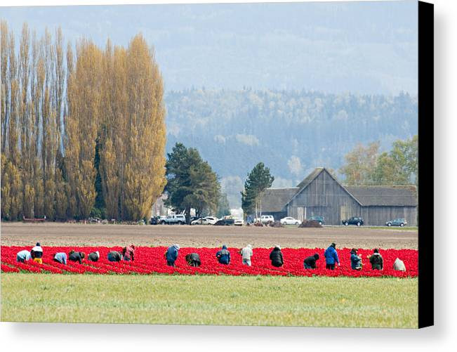 Flower Canvas Print featuring the photograph Farming Tulips L574 by Yoshiki Nakamura