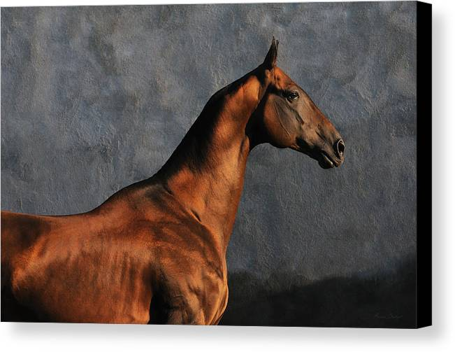 Horses Canvas Print featuring the photograph Gench #2 by Artur Baboev