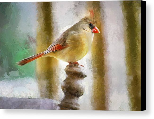 Redbird Art Canvas Print featuring the painting Lady Baby by Sherry Gaston