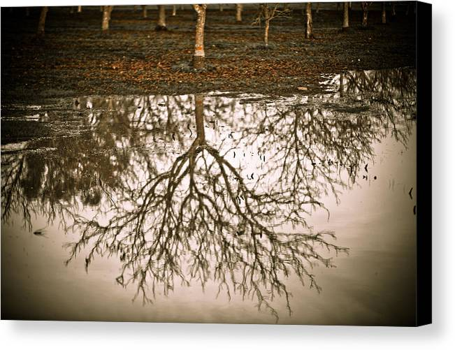 Nature Canvas Print featuring the photograph Roots by Derek Selander