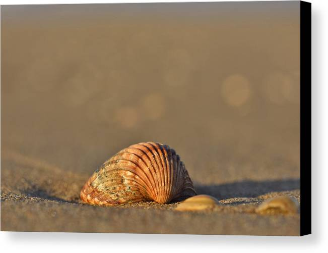 Shell Canvas Print featuring the photograph Shells On The Shore by Marek Stepan