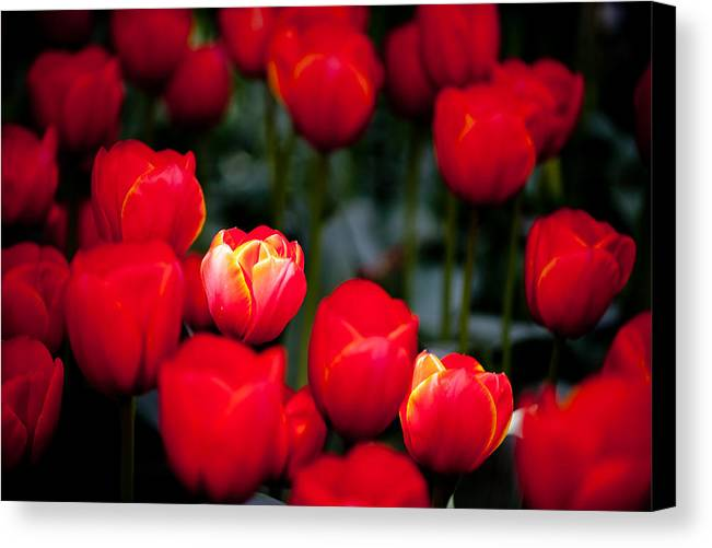 Flower Canvas Print featuring the photograph Soft Spotlight L572 by Yoshiki Nakamura