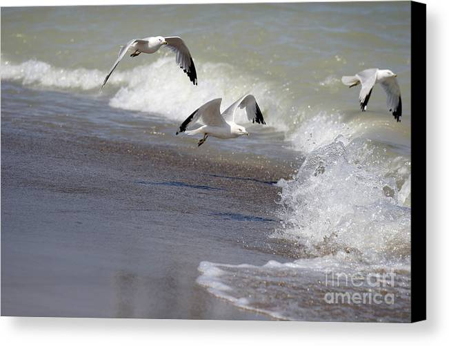 Seagull Canvas Print featuring the photograph Take Flight by Jeannie Burleson