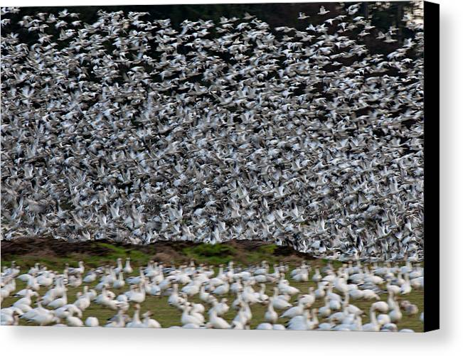 Wildlife Canvas Print featuring the photograph Take Off L509 by Yoshiki Nakamura
