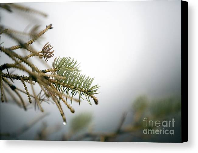 Winter Canvas Print featuring the photograph Thaw by Jeannie Burleson