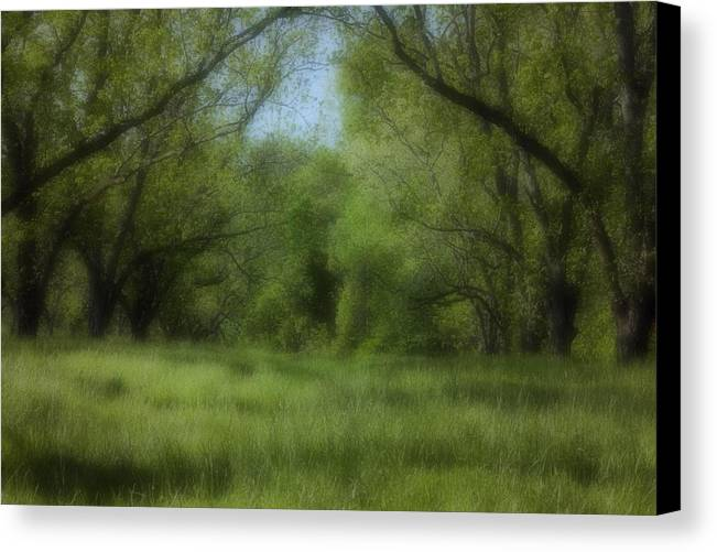 Landscape Canvas Print featuring the photograph The Meadow by Ayesha Lakes
