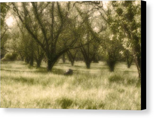 Landscape Canvas Print featuring the photograph The Orchard by Ayesha Lakes