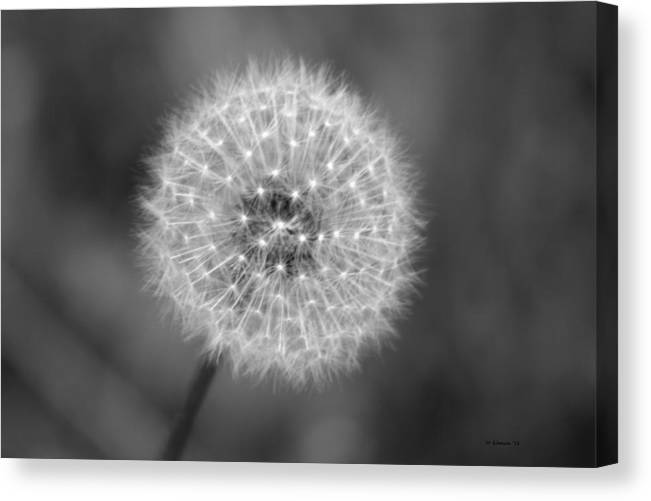 Dandelion Canvas Print featuring the photograph Dandelion Seed by DD Edmison