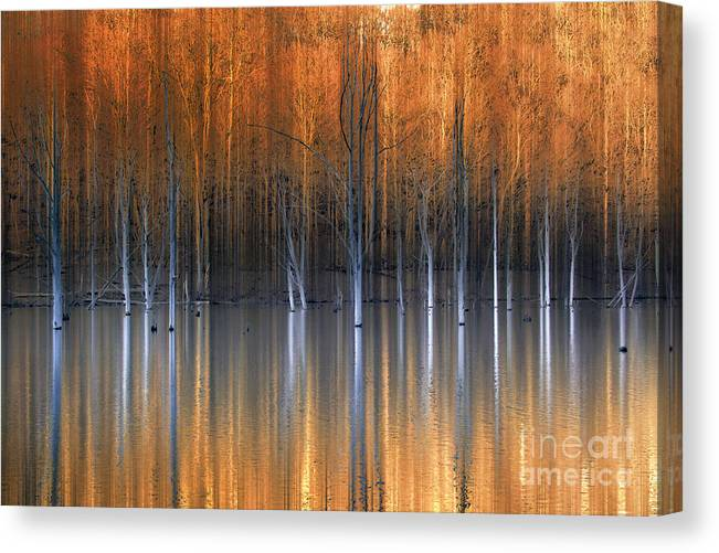 Award Winning Canvas Print featuring the photograph Emerging Beauties Reflected by Marco Crupi