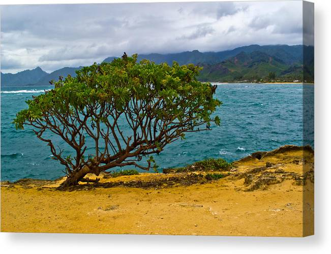 Hawaii Canvas Print featuring the photograph Green Tree by Matt Radcliffe