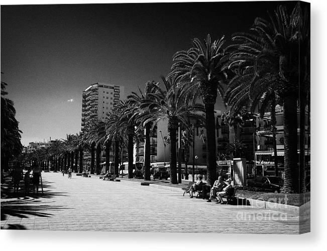 Tree Canvas Print featuring the photograph Tree Lined Seafront Promenade Salou Catalonia Spain by Joe Fox