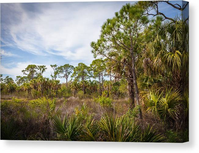 Werner Boyce Salt Springs State Park Canvas Print featuring the photograph Walk Among The Pines by Raymond Poynor
