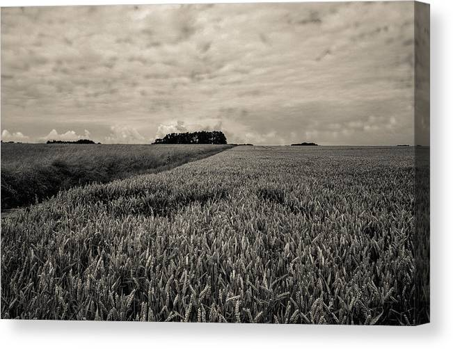 France Canvas Print featuring the photograph Wheatfields by Matthew Pace