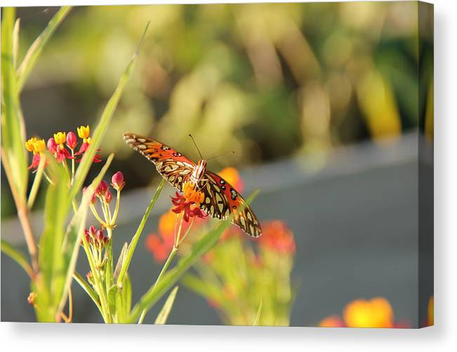 Butterfly Canvas Print featuring the photograph Working Hard by Robert Johnston