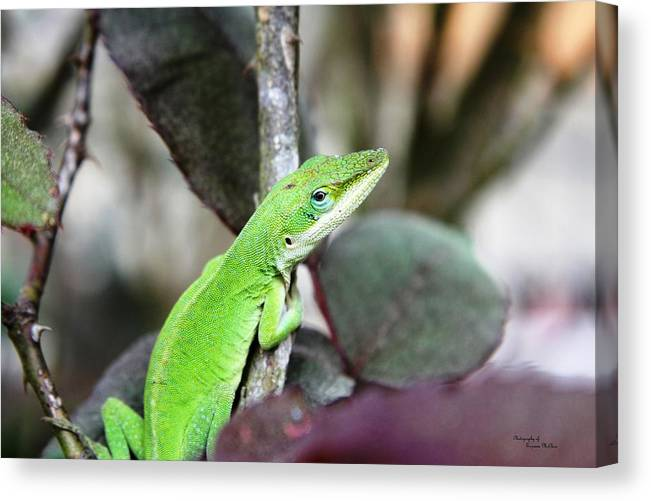Anole Canvas Print featuring the photograph Polychrotinae by Suzanne McClain