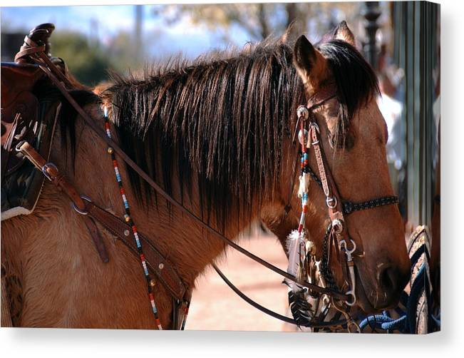 Horse Photo Canvas Print featuring the photograph Tombstone Horse by Anthony Citro