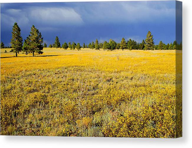 Evening Canvas Print featuring the photograph Evening Contrast by Barry Shaffer