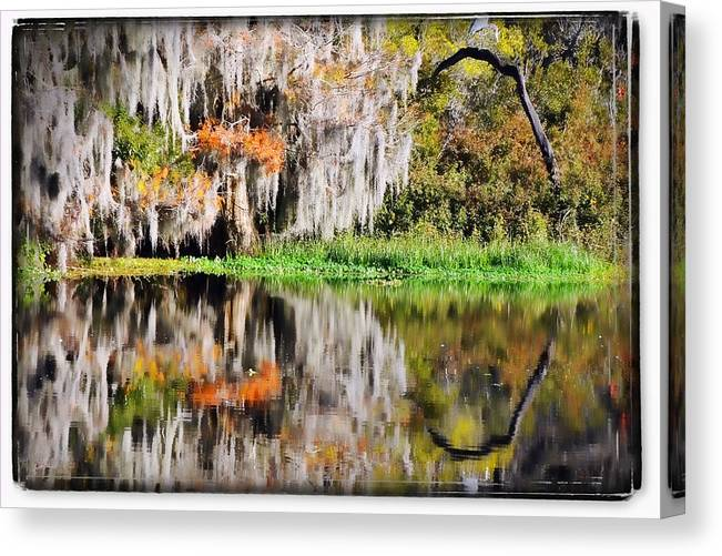 Florida Canvas Print featuring the photograph Fall In Florida by Pedro Katz