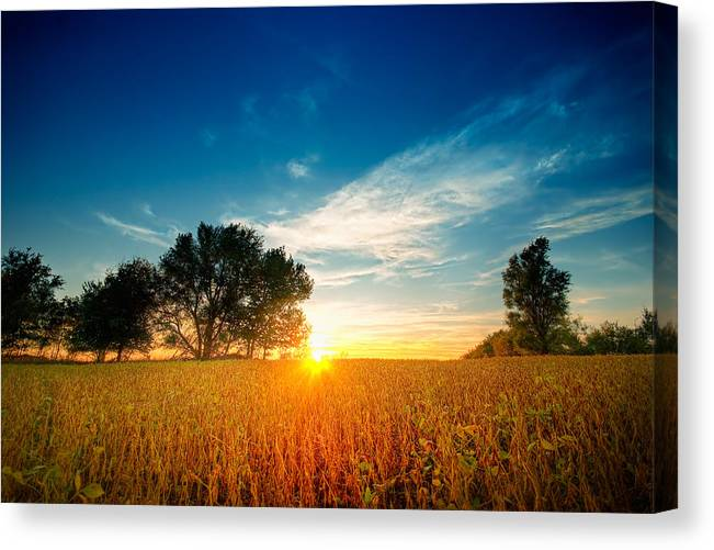 Field Canvas Print featuring the photograph Fields Of Gold by Ryan Heffron