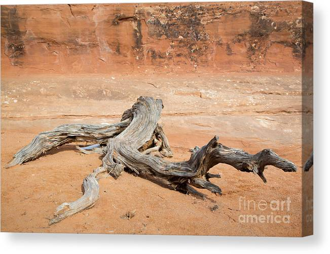 Abstract Canvas Print featuring the photograph Juniper Log On Sand by Mike Cavaroc