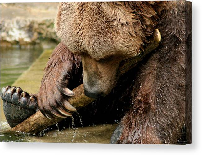 Brizzly Canvas Print featuring the photograph Play With Me Grizzly by ShadowWalker RavenEyes Dibler