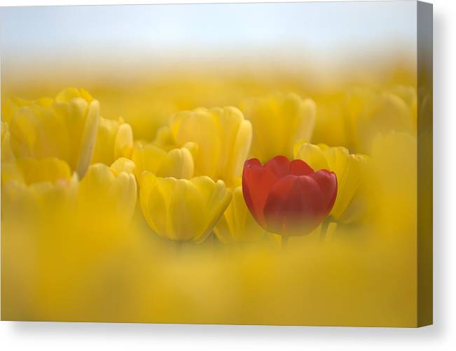 Flower Canvas Print featuring the photograph Red In Yellow L085 by Yoshiki Nakamura