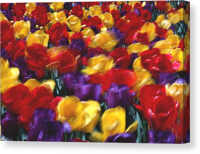 Flower Canvas Print featuring the photograph Singing Tulips L062 by Yoshiki Nakamura