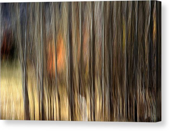 Trees Canvas Print featuring the photograph Support by Robert Shahbazi