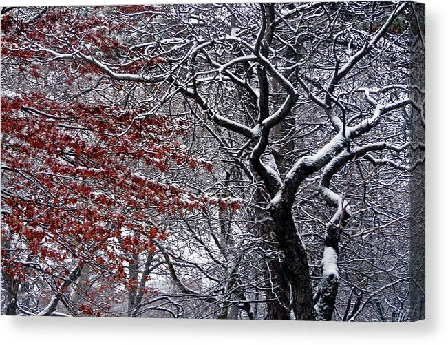 Landscape Canvas Print featuring the photograph Trees by Kendall Eutemey