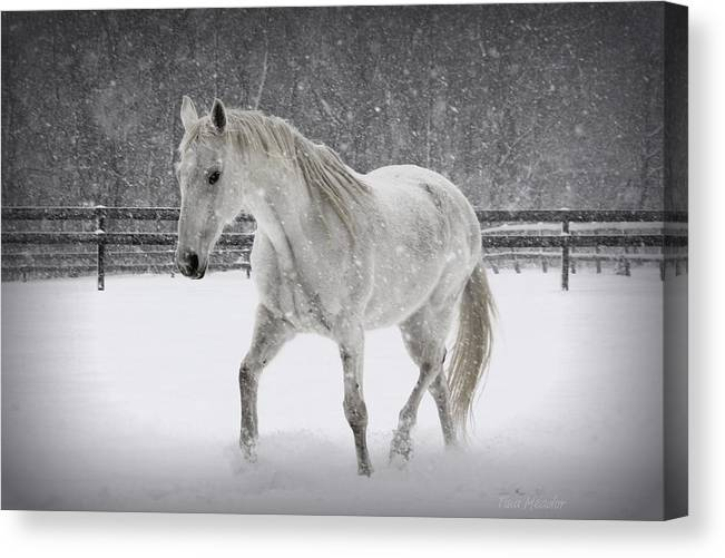 Horse Canvas Print featuring the photograph Trot In The Snow by Tina Meador