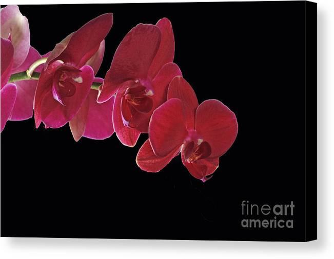 Inspired By Orchids Canvas Print featuring the photograph Inspired By Orchids by Inspired Nature Photography Fine Art Photography