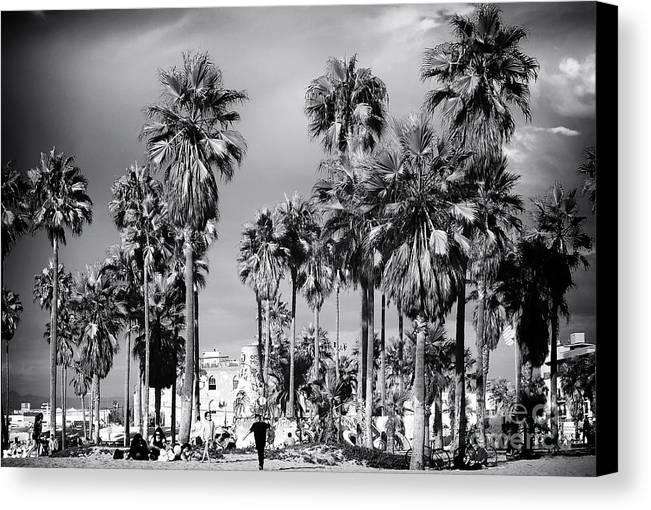 Venice Beach Palms Canvas Print featuring the photograph Venice Beach Palms by John Rizzuto