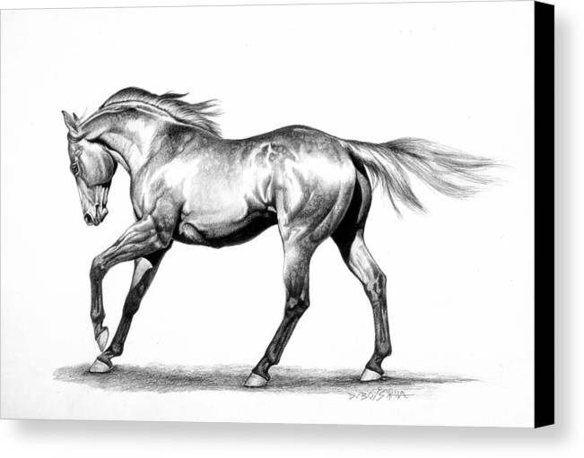 Thoroughbred Canvas Print featuring the drawing Proud by Howard Dubois