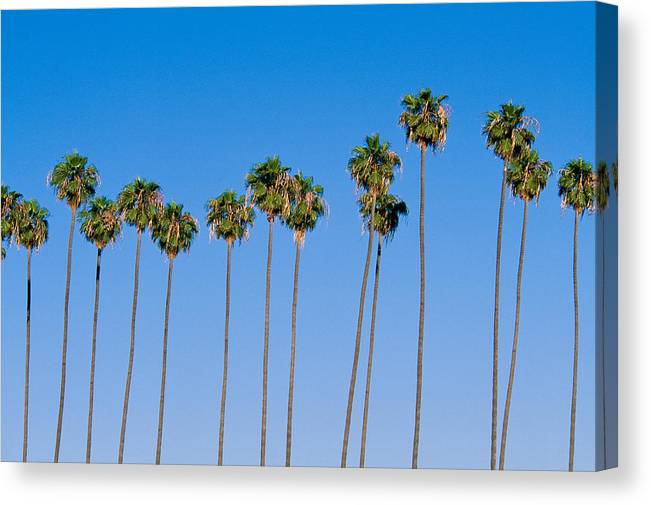 Blue Sky Canvas Print featuring the photograph Row Of Palm Trees by Rich Iwasaki