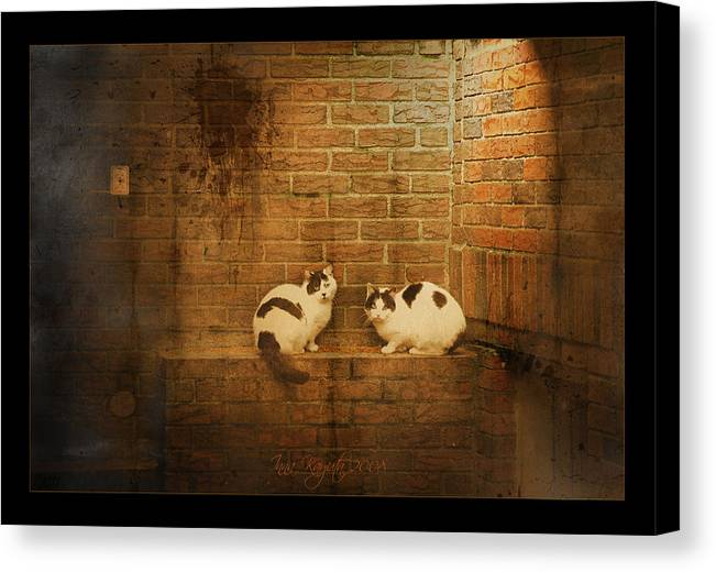 Cats Canvas Print featuring the photograph Spotlight by Inesa Kayuta