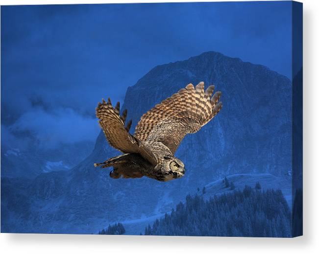 Great Horned Owl Canvas Print featuring the photograph The High Country by Donna Kennedy