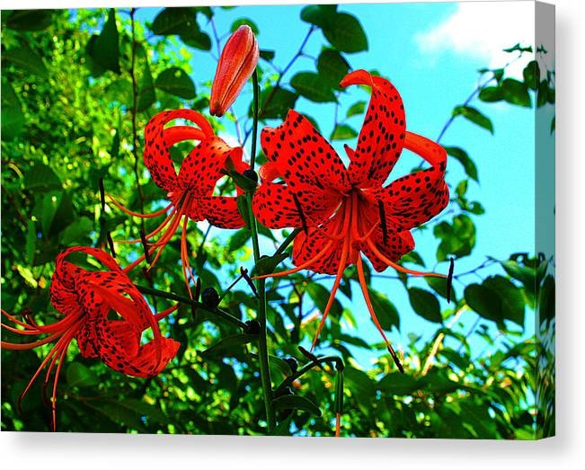 Digital Canvas Print featuring the photograph Nearby Pyeongchang by Michael C Crane