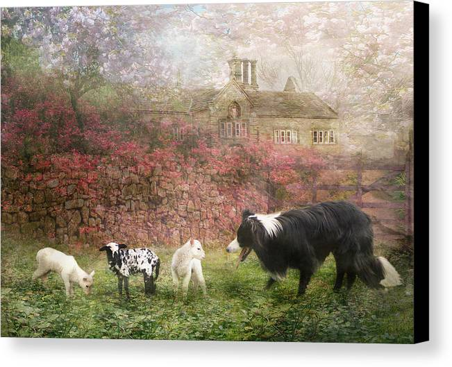 Border Collie Canvas Print featuring the photograph The Babysitter by Trudi Simmonds