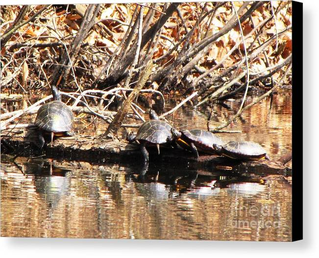 Canvas Print featuring the photograph Four Turtles by Melissa Stoudt