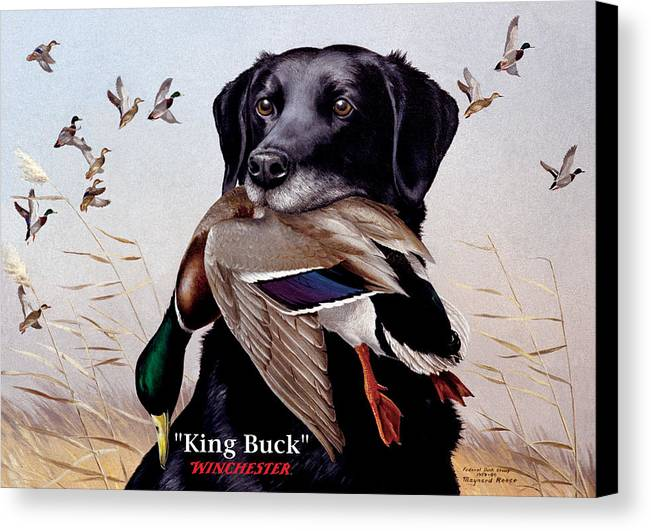 Dog Canvas Print featuring the painting King Buck  1959 Federal Duck Stamp Artwork by Maynard Reece